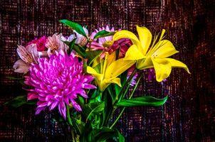 Фото бесплатно букет, цветы, георгин, лилии, флора