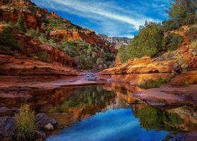 Photo free trees, landscape, Arizona
