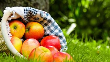 Photo free basket, towel, fruit