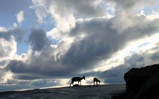 Фото бесплатно горы, камни, козлы