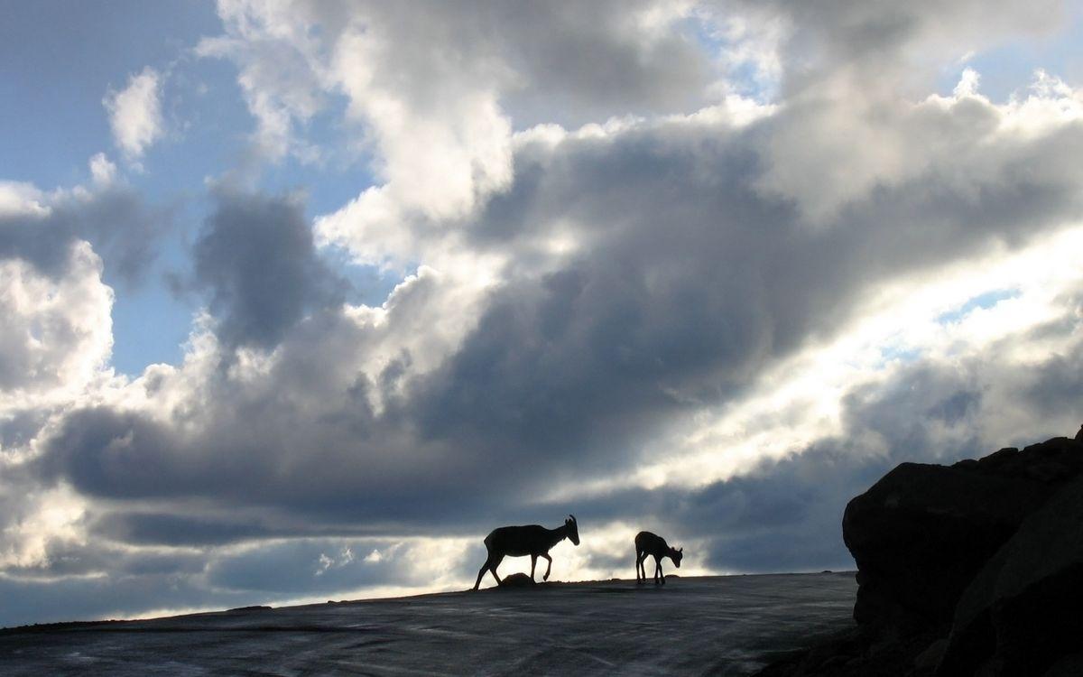 Фото бесплатно горы, камни, козлы - на рабочий стол