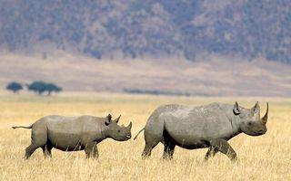 Бесплатные фото носороги,морды,уши,рог,хвосты,трава