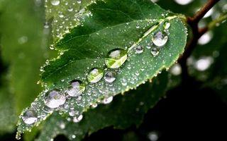 Заставки листья,зеленые,прожилки,капли,вода,роса