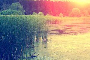 Фото бесплатно осень, река, закат