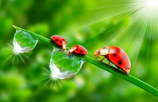 Photo free drops, sun, ladybugs