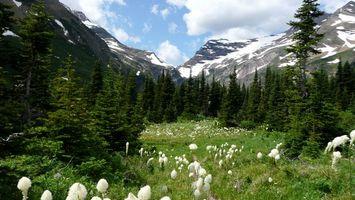 Бесплатные фото лес,деревья,поляна,трава,цветы,горы,снег