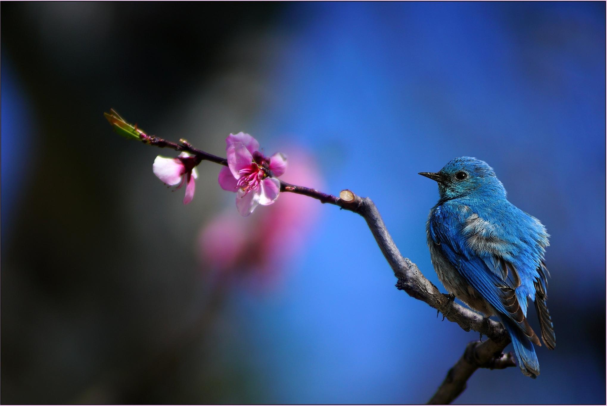 Обои ветка, цветок, птица