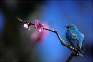 Бесплатные фото ветка,цветок,птица