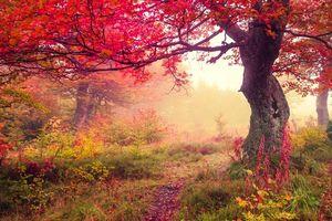 Бесплатные фото осень,деревья,лес,тропинка,туман,природа,пейзаж