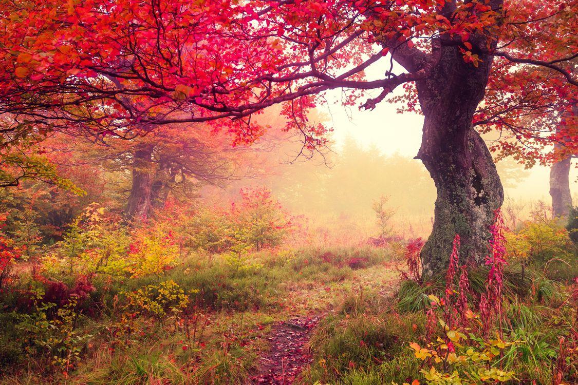 Фото бесплатно осень, деревья, лес, тропинка, туман, природа, пейзаж, пейзажи