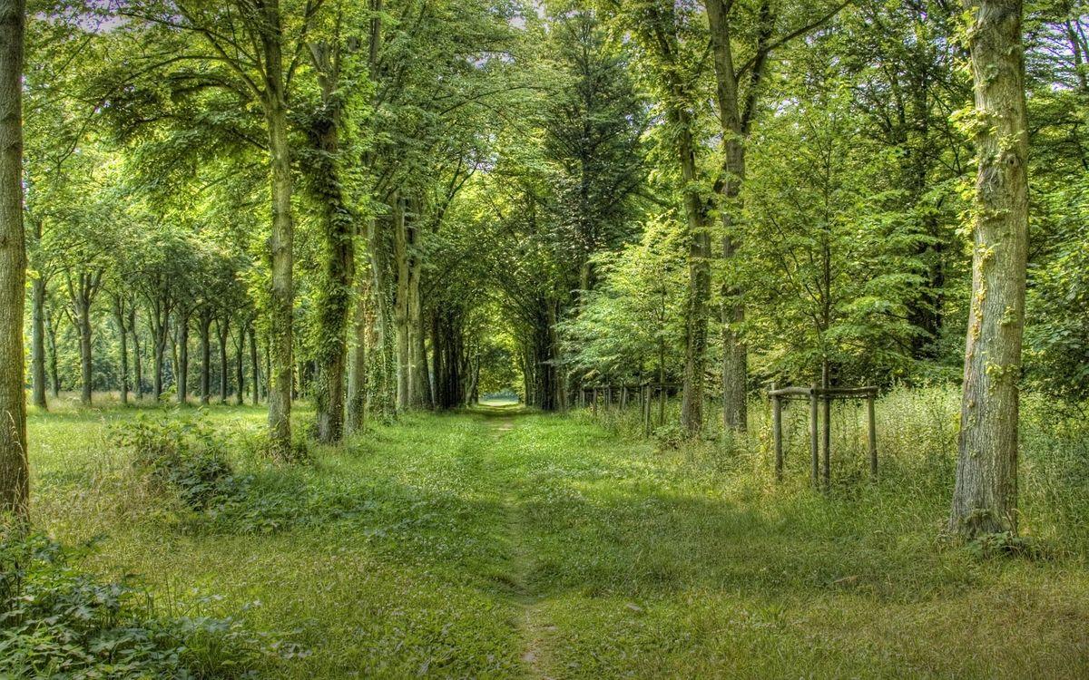 Фото бесплатно парк, деревья, кроны - на рабочий стол