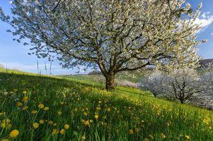 Заставки весна, Швейцария, поля