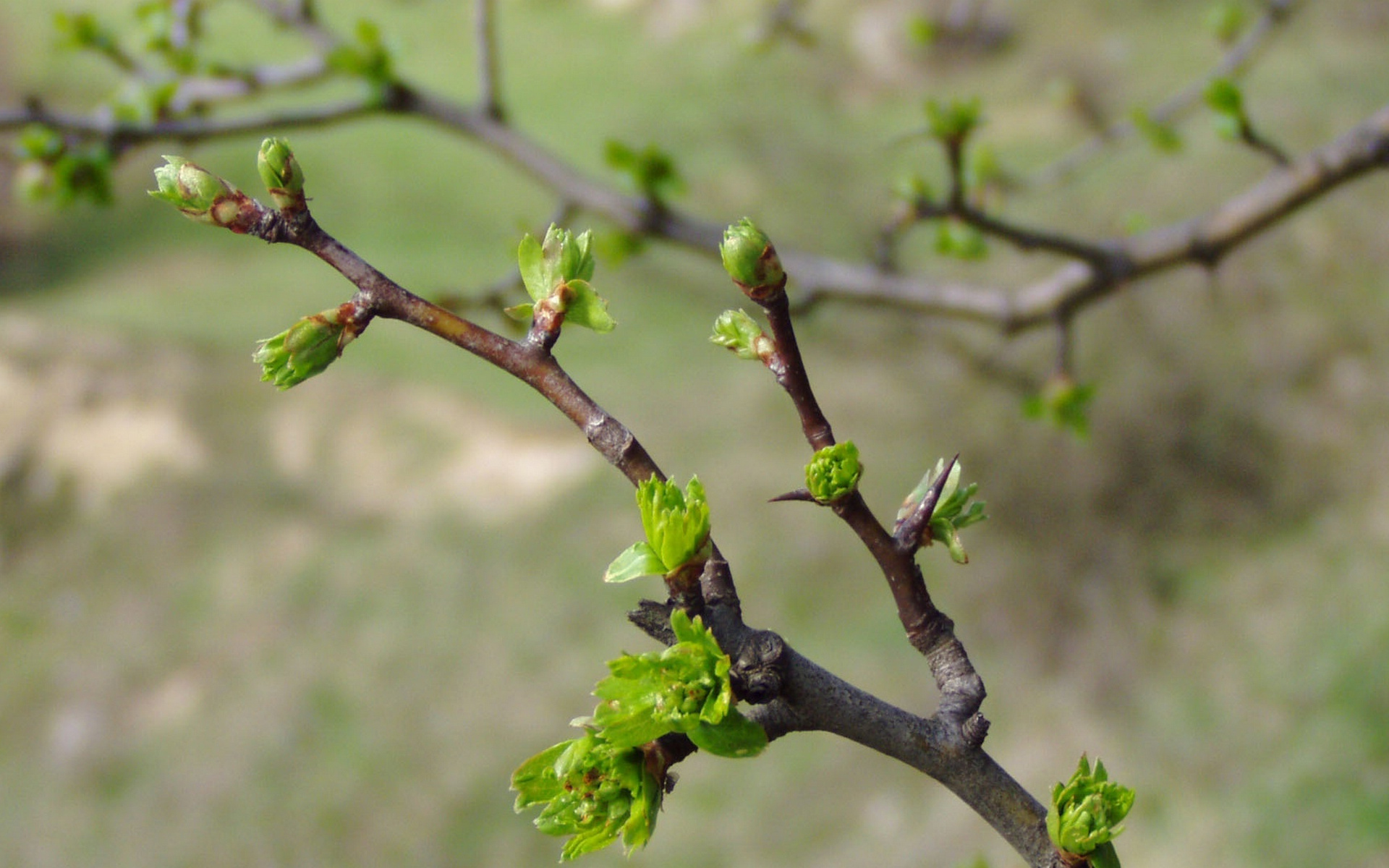 Открытки с днем весны юморные летом дерево