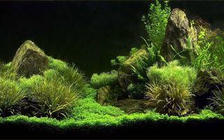 Бесплатные фото аквариум,водоросли,камни,растительность