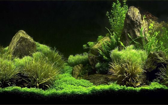 Photo free aquarium, algae, stones
