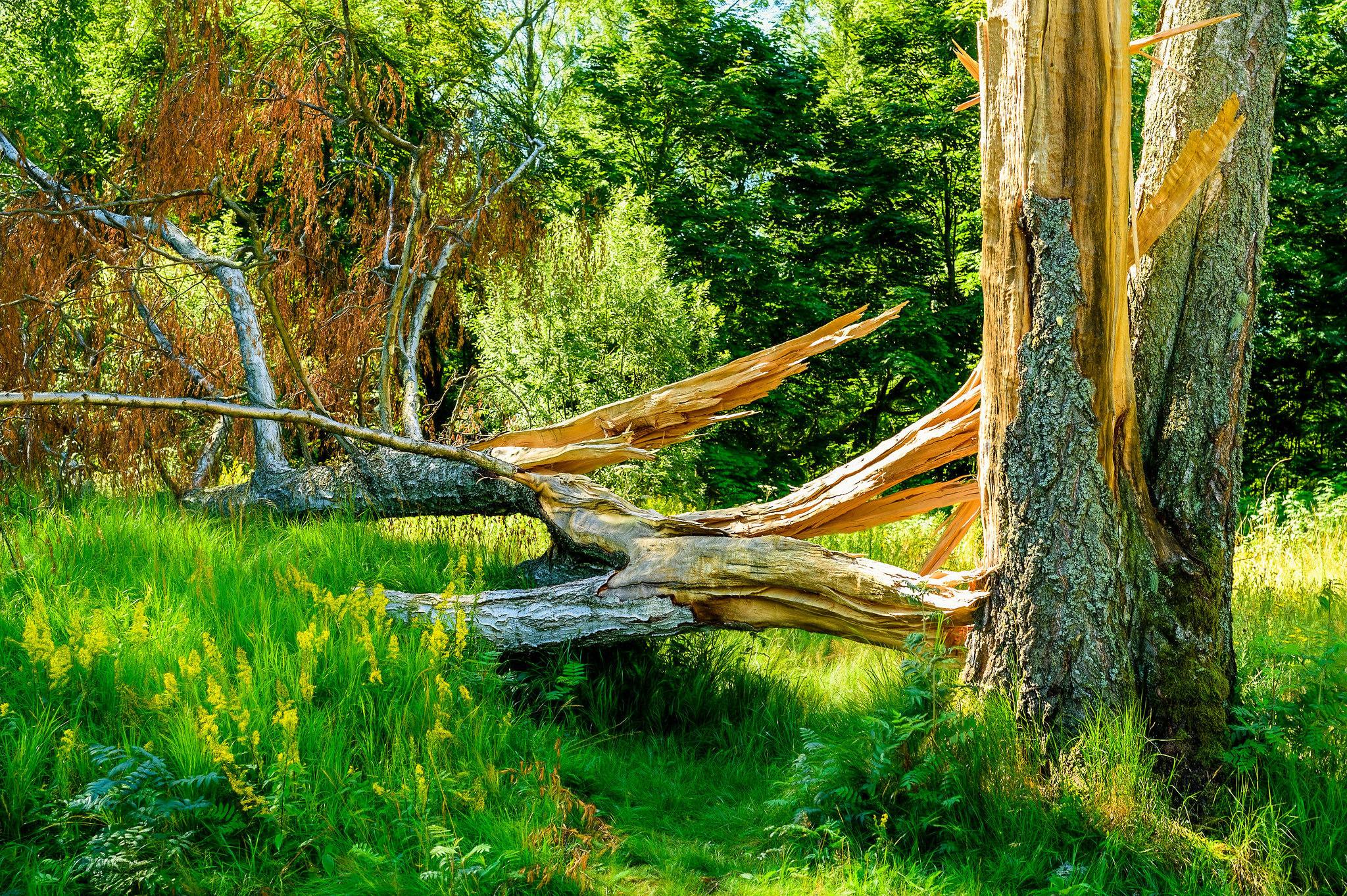 обои лес, деревья, сломанное дерево, природа картинки фото