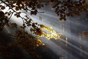 Бесплатные фото лучи солнца,ветки,деревья,листья