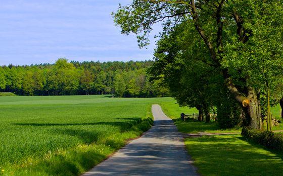 Бесплатные фото поля,зеленые,дорожка,деревья,небо,природа