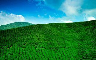 Бесплатные фото горы,лес,джунгли,заросли,небо,облака