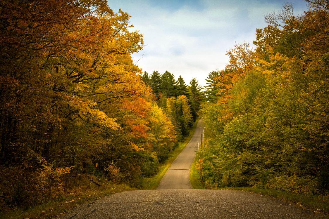 Фото бесплатно осень, дорога, лес, деревья, пейзаж, пейзажи