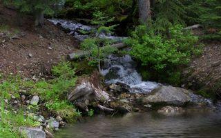 Бесплатные фото ручей,течение,камни,коряги,кустарник,деревья