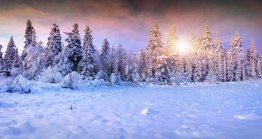 Бесплатные фото закат, зима, снег, деревья, сугробы, пейзаж