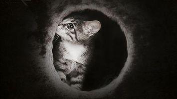 Фото бесплатно котенок, дом, шерсть