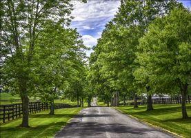 Фото бесплатно пейзаж, дорога, поля