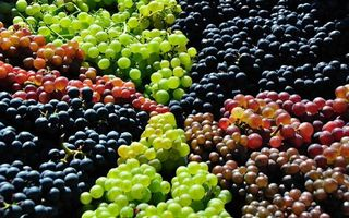 Photo free grapes, different varieties, berry