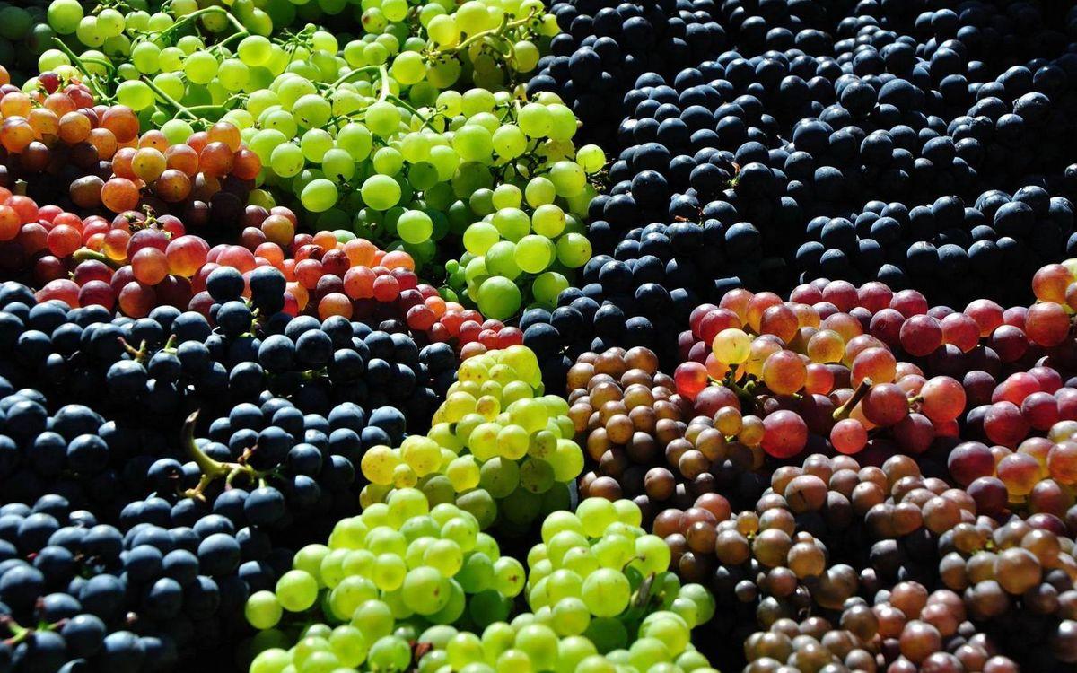 Фото бесплатно виноград, разные сорта, грозди, ягода, еда