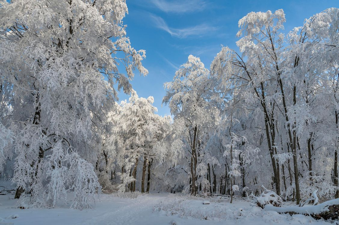Фото бесплатно зима, лес, деревья, дорога, пейзаж, пейзажи