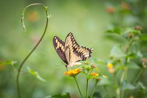 Бесплатные фото бабочка,цветок,цветы,флора,макро
