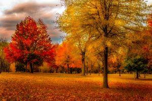 Бесплатные фото осень, парк, лес, деревья, пейзаж