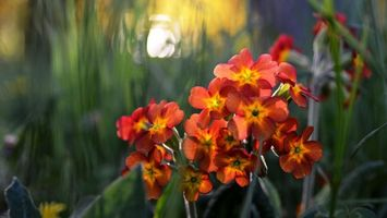 Бесплатные фото цветочки, лепестки, листья, стебли, солнце