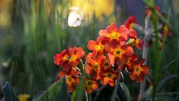 Бесплатные фото цветочки,лепестки,листья,стебли,солнце