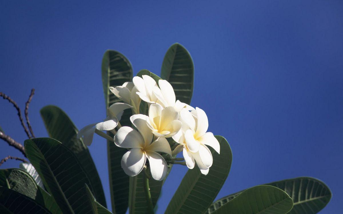 Фото бесплатно цветок, лепестки, белые, листья, зеленые, ветви, цветы