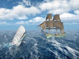 Бесплатные фото кит,хищник,оскал,опасность,art