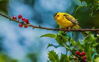 Бесплатные фото птичка,клюв,крылья,хвост,желтая,лапы,ветки