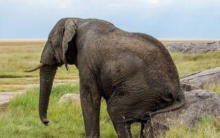 Бесплатные фото слон,сидит,уши,бивни,хобот,хвост,камни