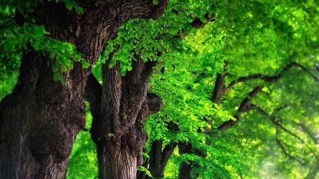 Photo free trees, summer, greenery