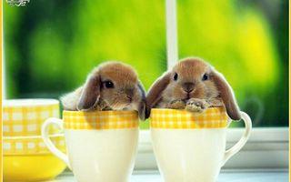 Фото бесплатно кролики декоративные, морды, уши