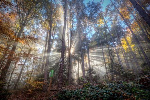 Заставки лес,деревья,туман,солнечные лучи,природа