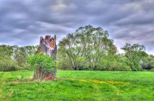 Фото бесплатно поле, цветы, деревья, небо, пейзаж