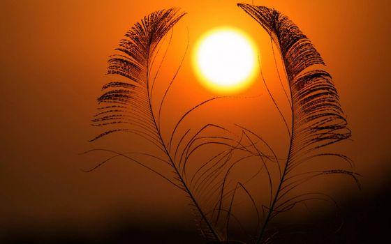 Заставки солнце, Африка, трава
