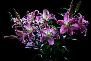 Фото бесплатно лилии, лилия, букет