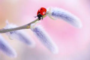Бесплатные фото божья коровка,насекомые,растение,ветка,макро