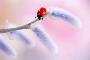 Photo free ladybug, insects, branch