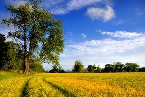 Бесплатные фото поле,деревья,природа,пейзаж