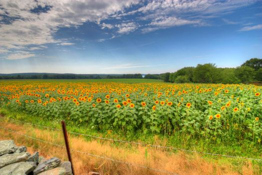 Бесплатные фото поле,подсолнухи,пейзаж