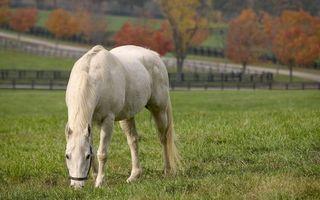 Заставки белый конь, лошадь, поле